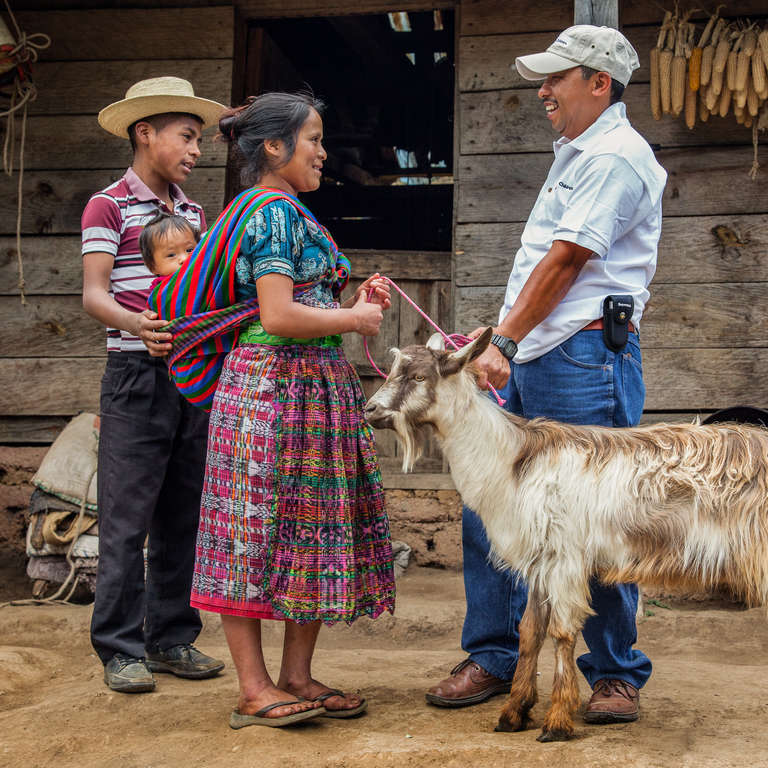 Goat Farming in Nebaj, Guatemala. Photo Credit: Jordan J. Hay 2015