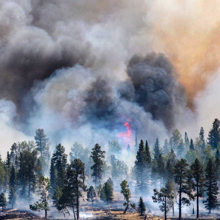 Wallow Fire in 2011 burned 538,000 acres and was the largest in Arizona history. Photo Credit: Rick D'Elia 2011.