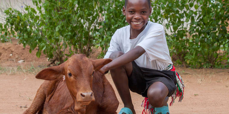 A young boy poses cheerfully with a calf. The gift of a cow for a family can deliver lifesaving milk to hungry children. Plus, the parents can sell extra milk as a source of income. Photo credit: Save the Children.
