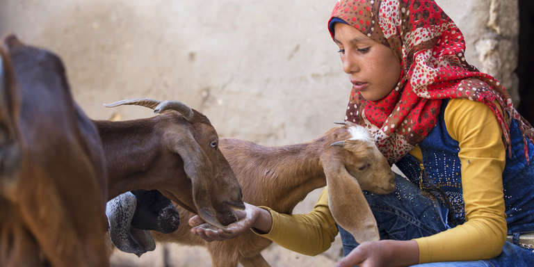 A 15-year old girls kneels on the ground outside her home in Egypt and is circled by a small group of goats who feed from her outstretched hands. Save the Children supporters can shop for lifesaving gifts, including goats and other livestock, in our gift catalog. Photo credit: Joseph Raouf/Save the Children, May 2017.