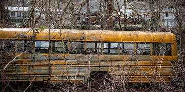 A school bus behind branches.