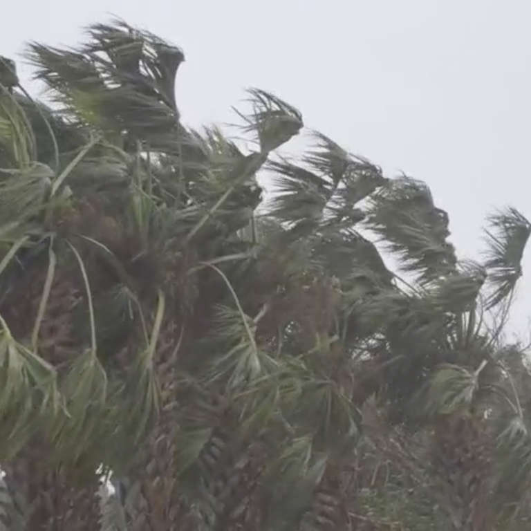 Strong winds cause a group of palm trees to bend. Photo credit: Save the Children